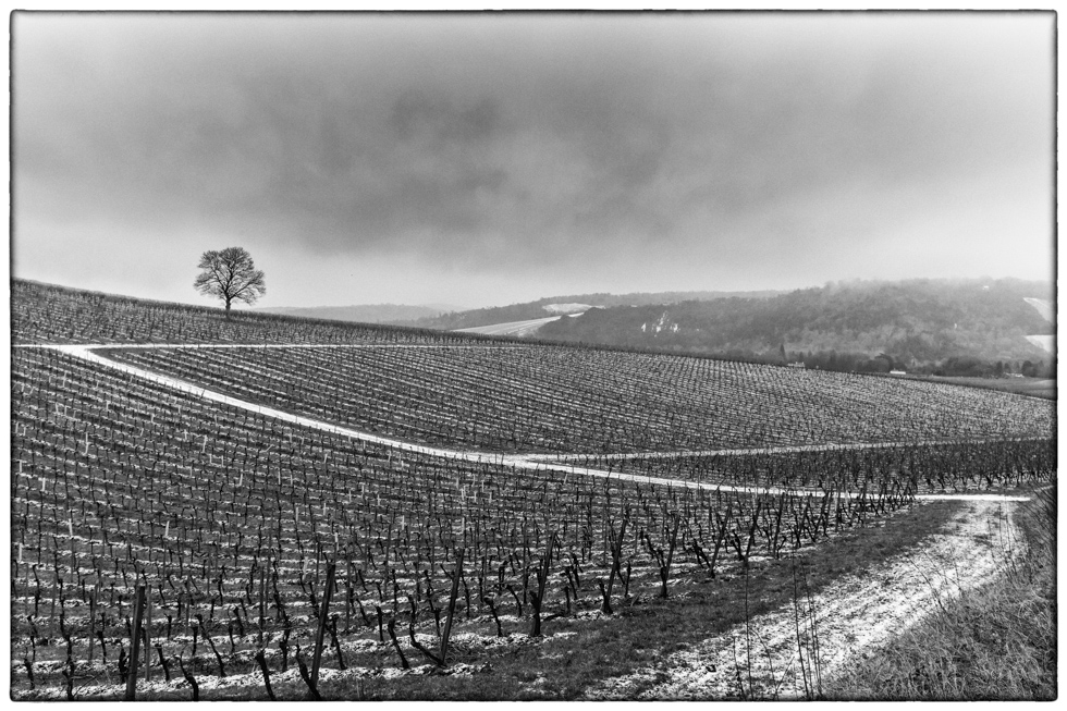 Denbies Wine Estate in the Snow, Surrey