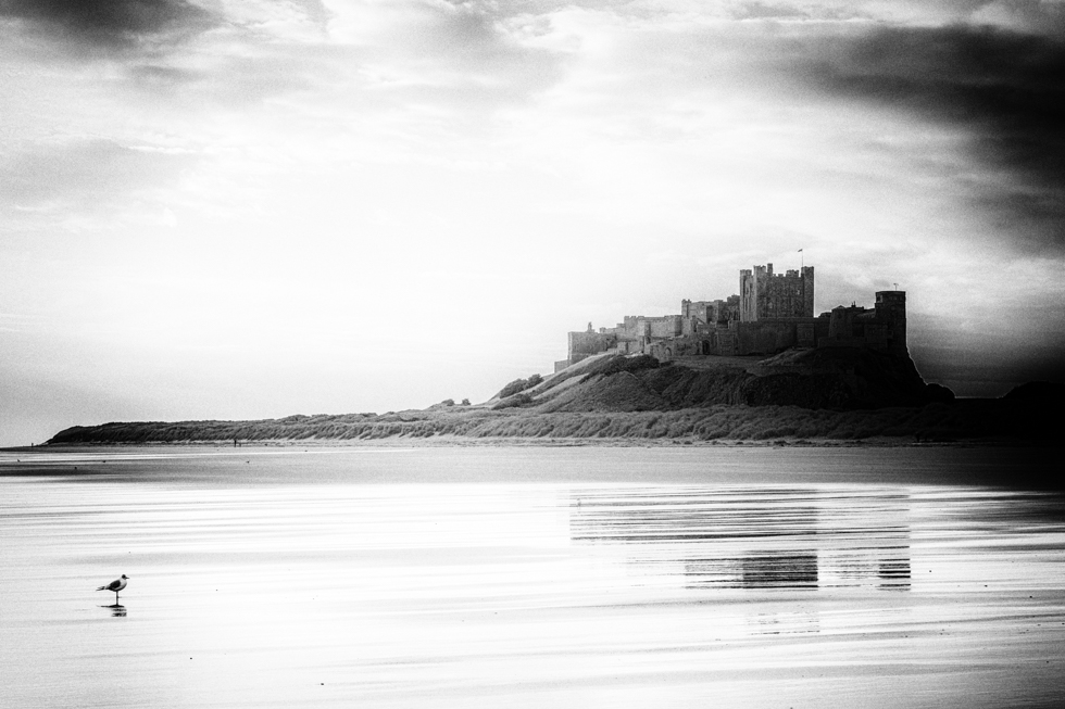 Bamburgh Castle with Seagull, Northumberland