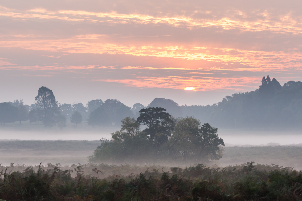 Misty Winter Sunrise, Richmond Park, London