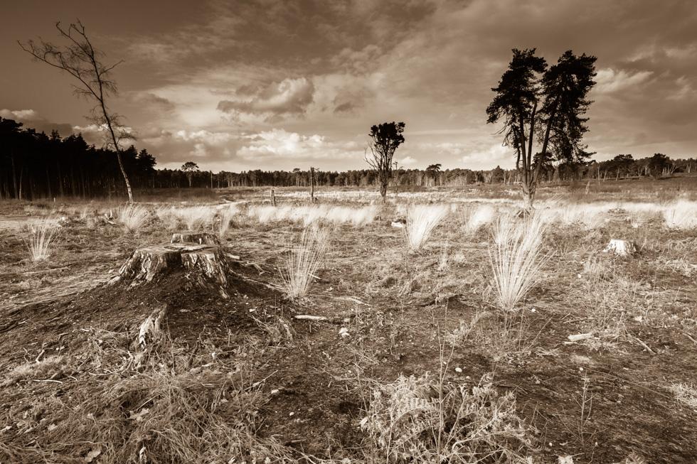 Ockham's Apocalypse