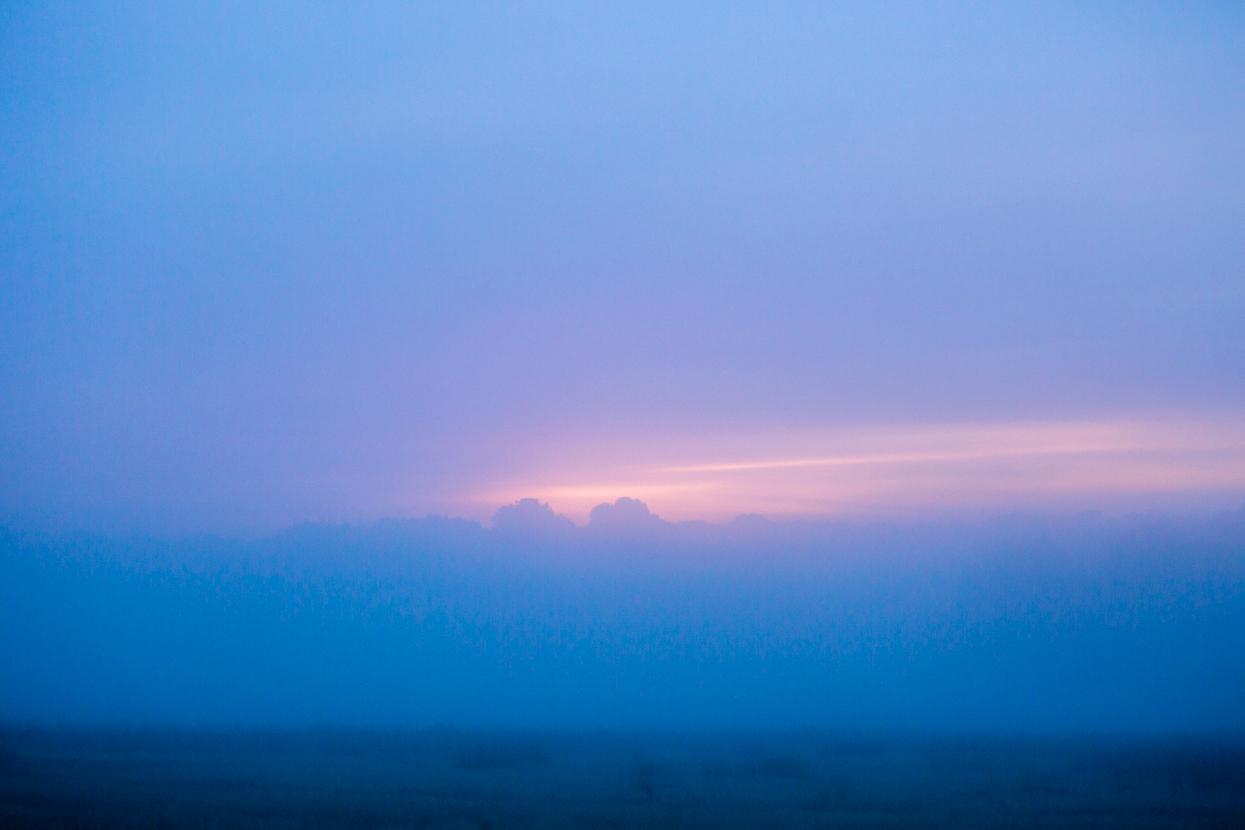 Early Morning Light, Richmond Park, London