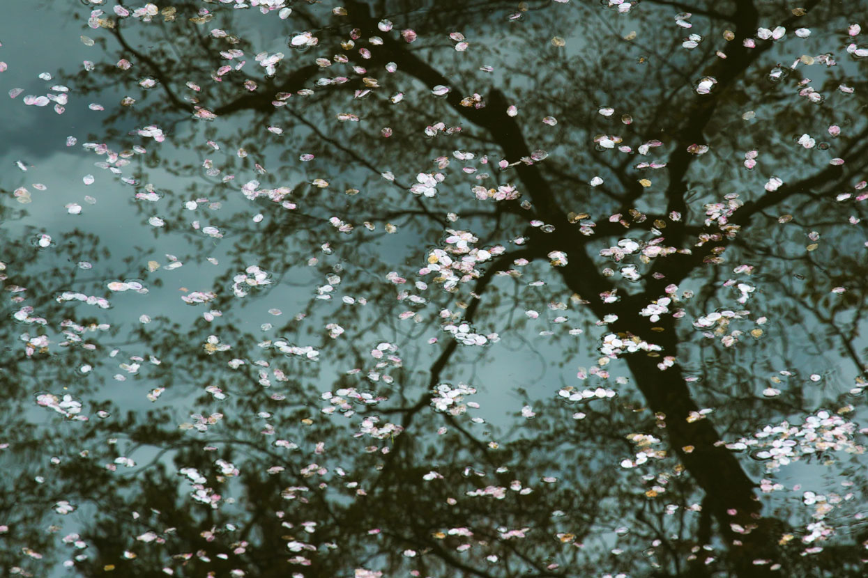 Adriaan-van-Heerden-Ode-To-Mortality-Sakura-Reflection-Kiyomizu-dera-Temple-Kyoto-Japan-5744