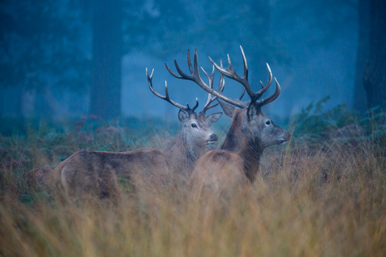 Two Stags, Richmond Park, London