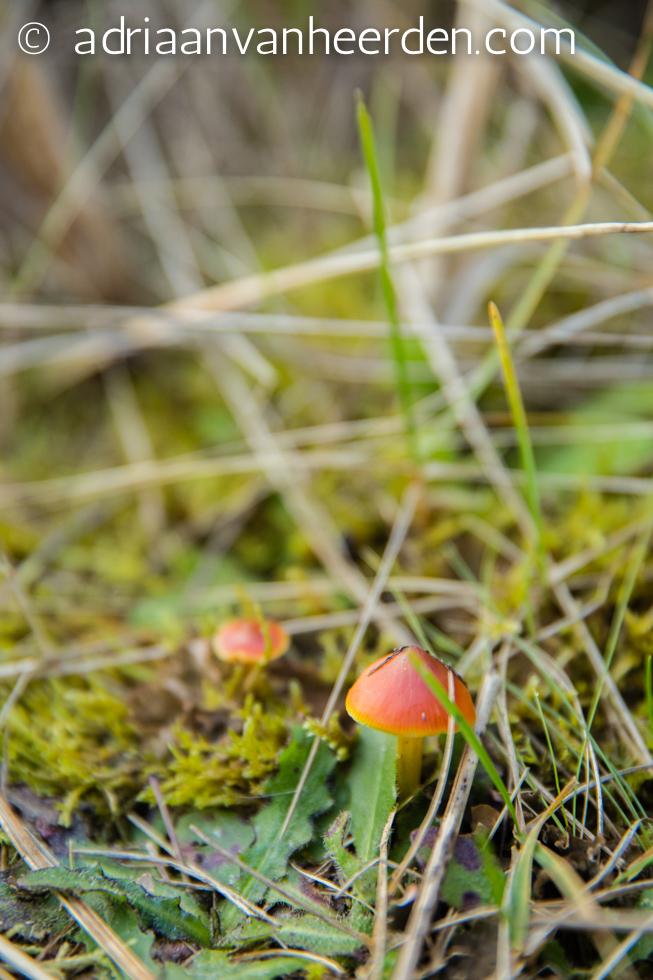 Fungi, Holy Island, Northumberland
