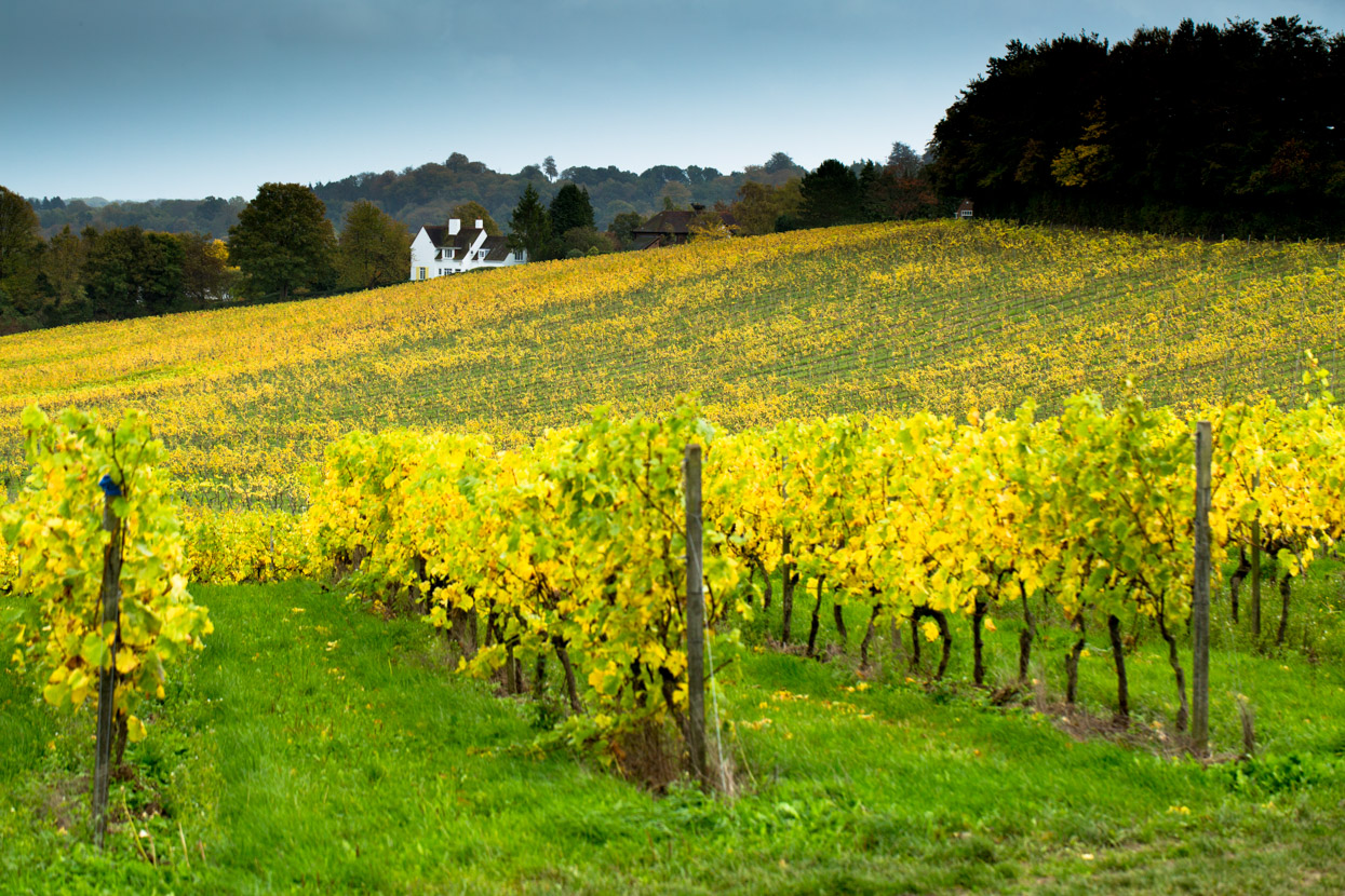 Autumn, Denbies Wine Estate, Surrey