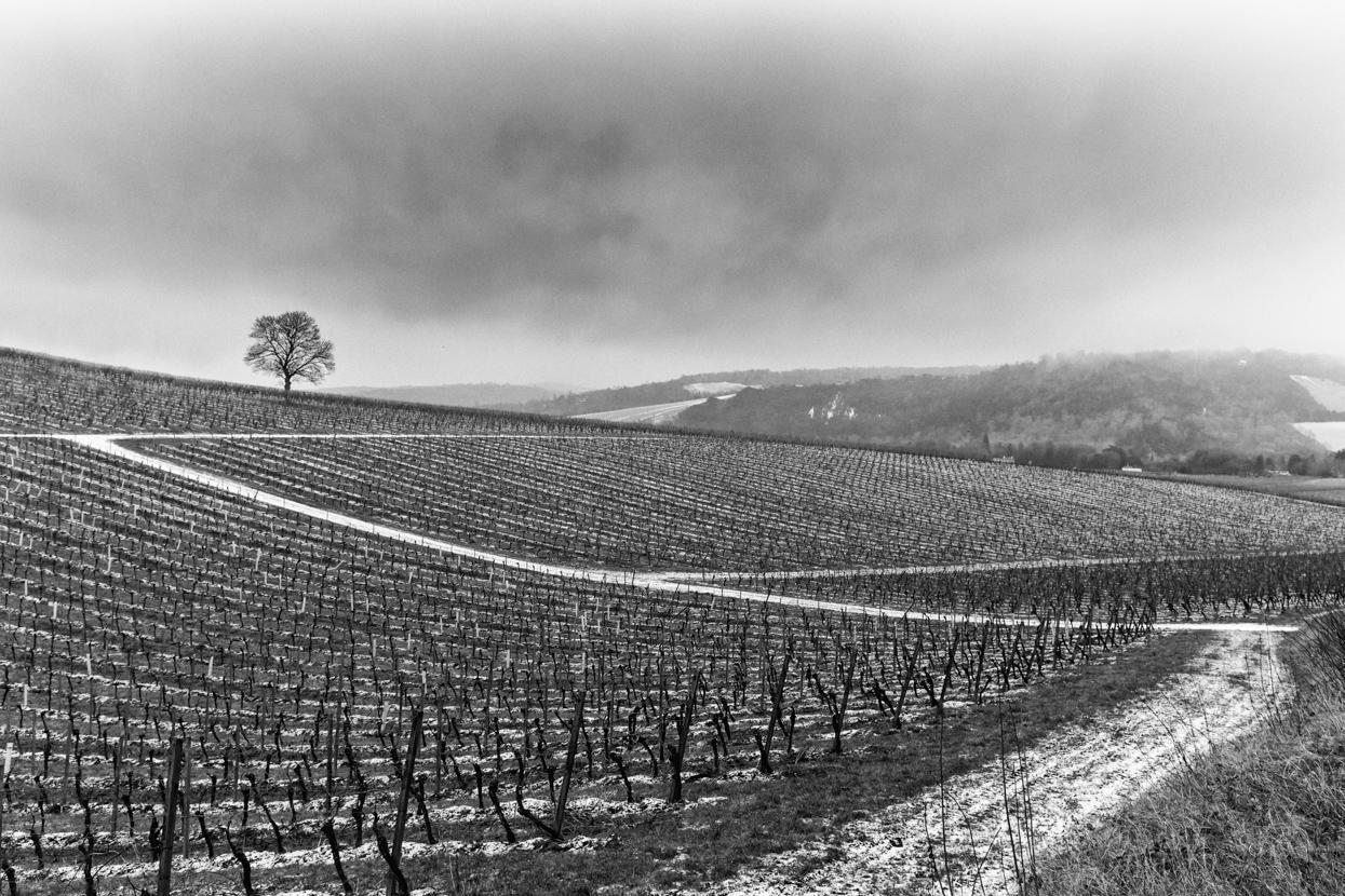 Denbies Wine Estate in the Snow, Surrey
