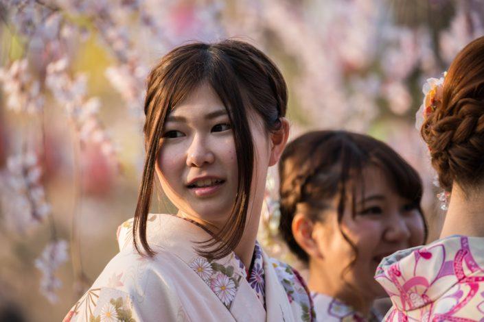 Cherry Blossoms, Maruyama Park, Kyoto, Japan