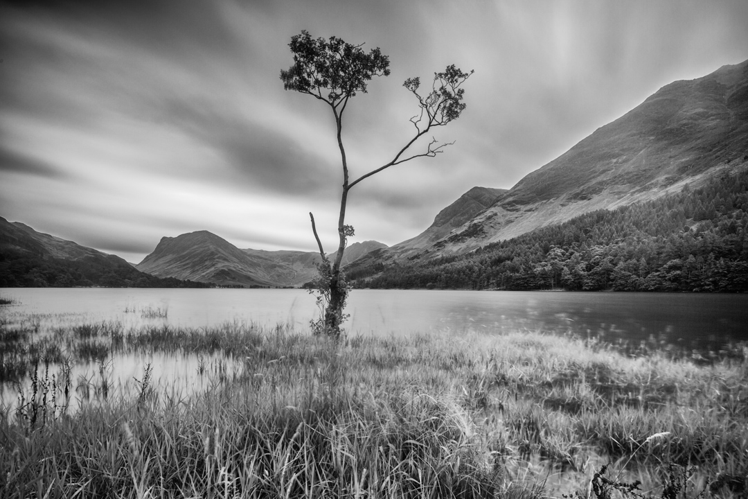 Lone Birch Tree, Buttermere, Lake District, UK